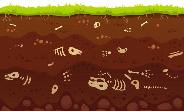 Animal skeletons buried underground