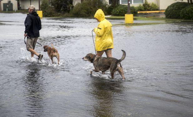 Hurricane Florence pets