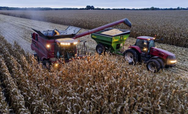 Corn is harvested