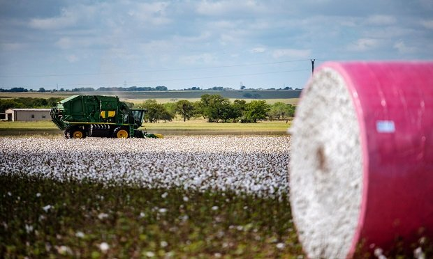 A cotton sweeper sweeps a field outside Rogers, Texas, on Thursday, Aug. 30, 2018. (Photo: Sergio Flores/Bloomberg)