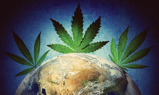 Cannabis laws.