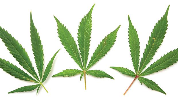 Marijuana goes to work.