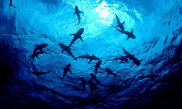 Every company has its own shark-like threats circling beneath the surface. (Photo: Shutterstock)