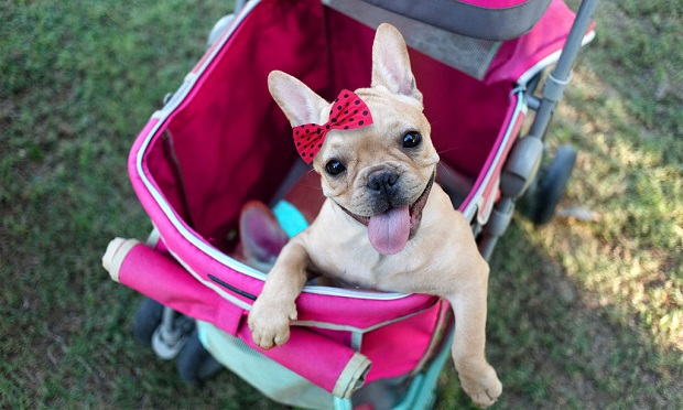 Social distancing during COVID-19 has underscored how insurance helps protect what's important, including our furry family members. (Shutterstock)