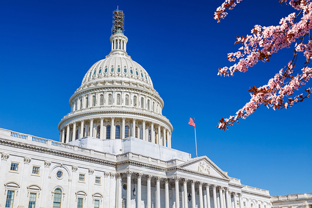 U.S.-Capitol-with-cherry-blossoms