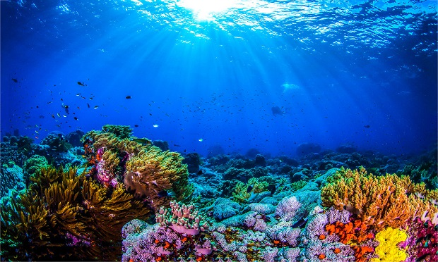 A healthy coral reef can reduce up to 97% of a wave's energy before it hits the shore, says The Nature Conservancy. (Photo: Shutterstock)