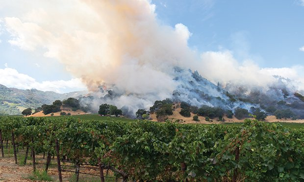 Vineyards on fire.