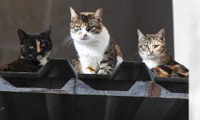 Feral cats uncover ambiguous language in rental dwelling policy