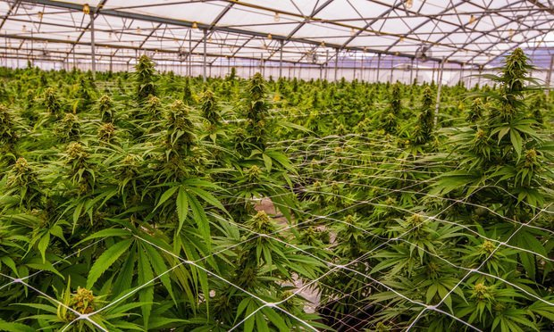 The conflict between state and federal laws is keeping many mainline admitted insures from writing cannabis businesses. As a result, any new capacity coming into the market is from existing players and programs looking to expand. However, carriers are giving this sector a hard look, Amwins, Inc. reported. (Credit: Ian Miller/Adobe Stock)
