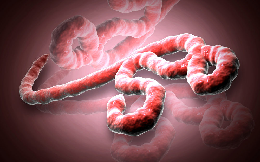 a look at the ebola epidemic as the looming threat that never was If fears of a zombie apocalypse keep you up at night, then it's good you've taken the initiative to prepare: stockpiled water and food invested in backup medical.