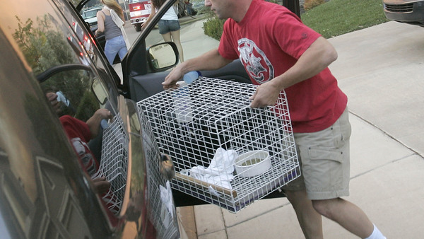 An unidentified man loads a cage with his two pet rabbits inside his car as he evacuates from a wildfire in Foothill Ranch, Calif. on Monday, Oct. 22, 2007. (AP Photo/Dan Steinberg)