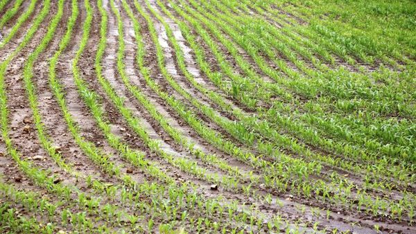 Changing weather patterns have left farmers in less-developed countries vulnerable to crop losses. (Photo: Thinkstock)
