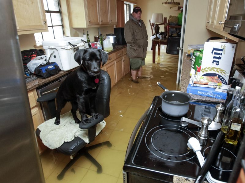 Rowdy the dog finds refuge on an office chair in Harvey Cook's flooded home in Hammond, La., Friday, March 11, 2016
