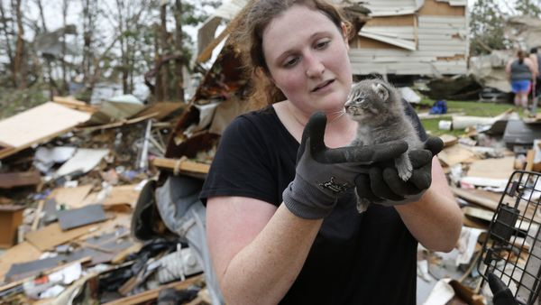 Maeghan Hadley, of 1Day Ranch pet rescue, checks over a kitten pulled from under the rubble of a mobile home destroyed by a tornado in the Steelman Estates Mobile Home Park, near Shawnee, Okla., on May 20, 2013. Following the rescue, an outpouring of love for the kitten came from all over the world, with some people even asking if the kitten could be shipped abroad. (Photo: Sue Ogrocki/AP Photo)