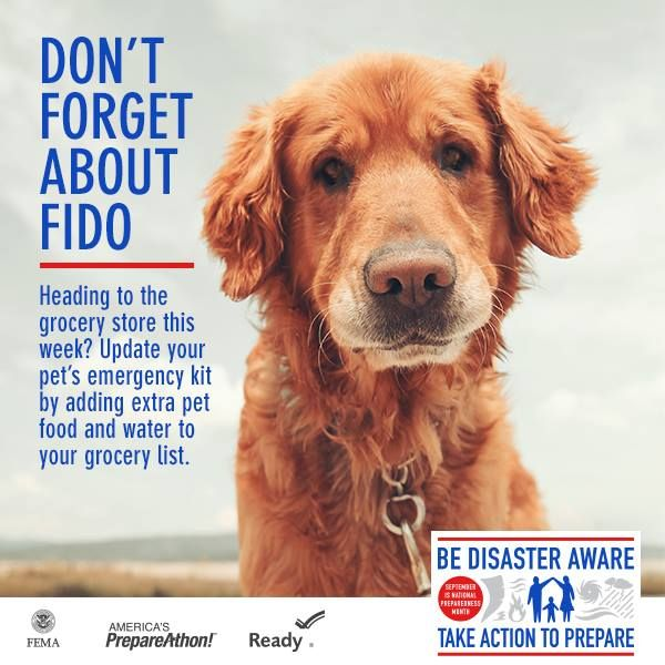 Cute dog on Don't forget about Fido poster