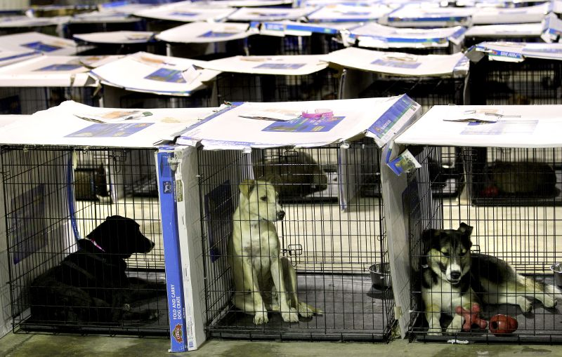 rescued dogs sit in their kennels at a shelter in Joplin, Mo. after surviving an EF-5 tornado