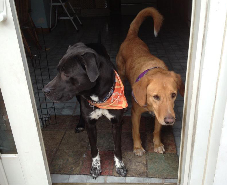 Black dog and yellow dog standing in doorway