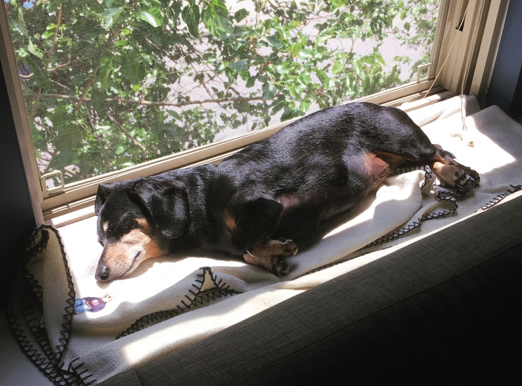 Dog-sleeping-on-window-sill