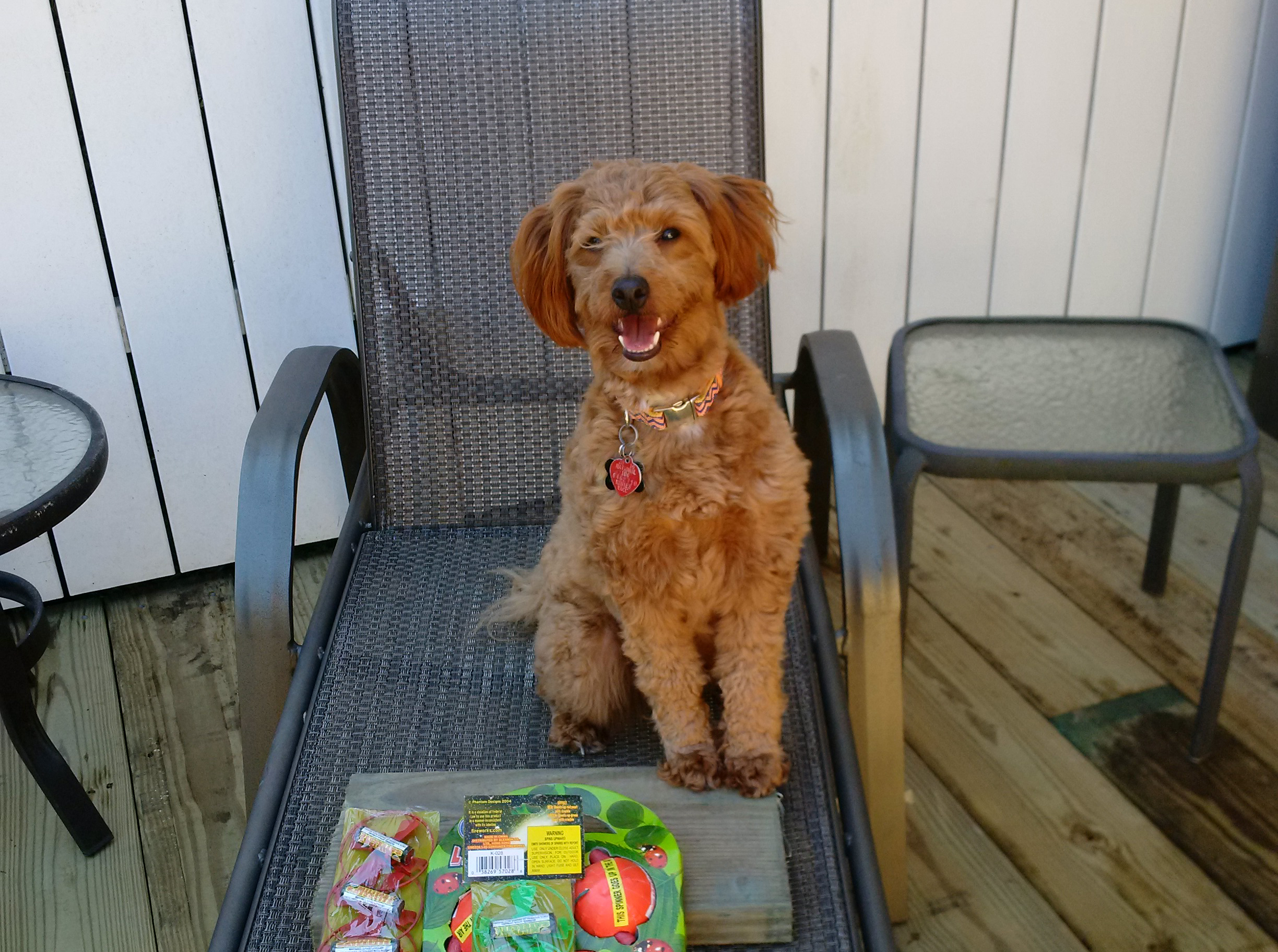 Dog on lawn chair with fireworks