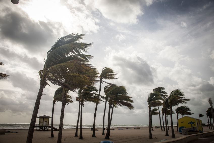Palm tree blown by hurricane