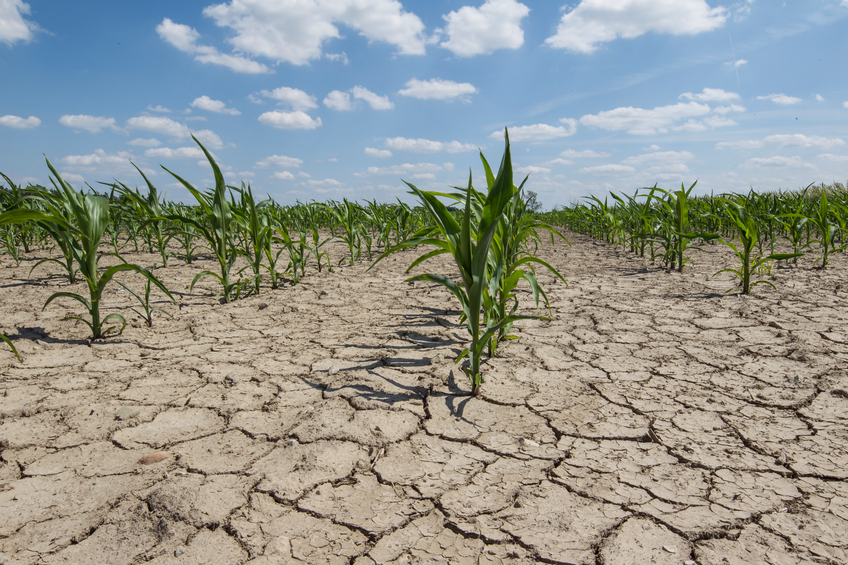 Dry crop field
