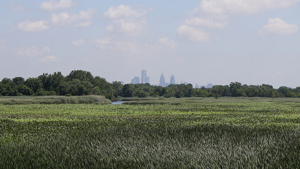 The Philadelphia skyline is seen in the background of John Heinz National Wildlife Refuge. (Photo: Flickr)