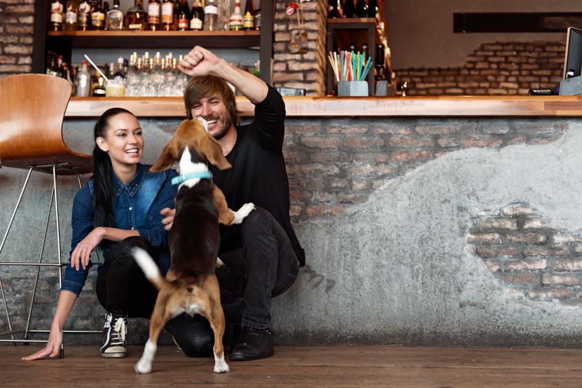 Dog at a brewery