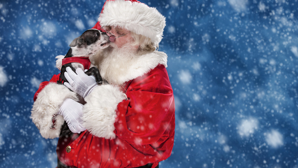 With the holidays around the corner, make sure your pets keep their paws off some of these dangerous holiday items. (Photo: iStock)