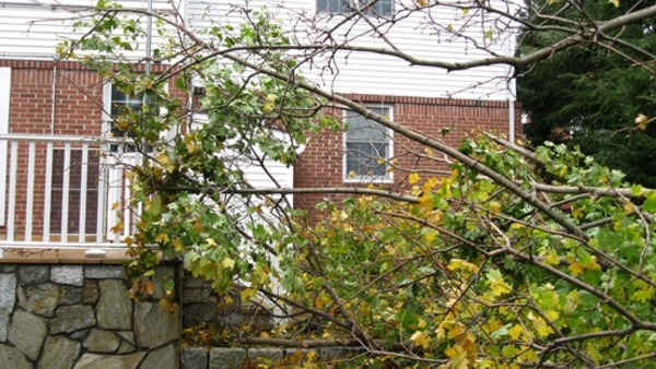 Trees can fall or lose limbs for a variety of reasons, and they're not all covered by insurance. (Photo: R. Donlon)
