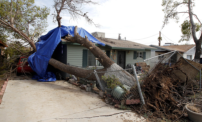Tree falls on house in dust storm