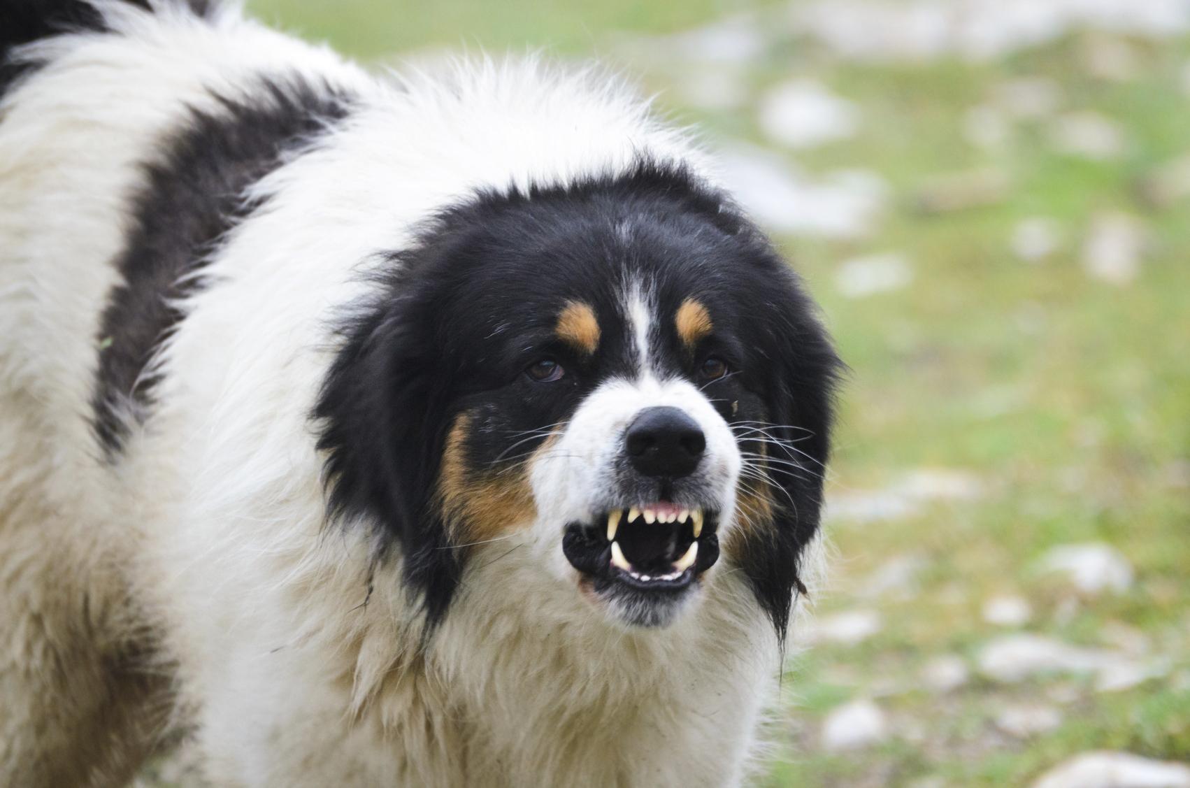 Homeowners Insurance Dog Bite
