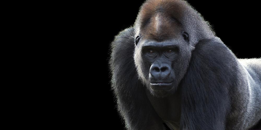 gorilla insurance claim