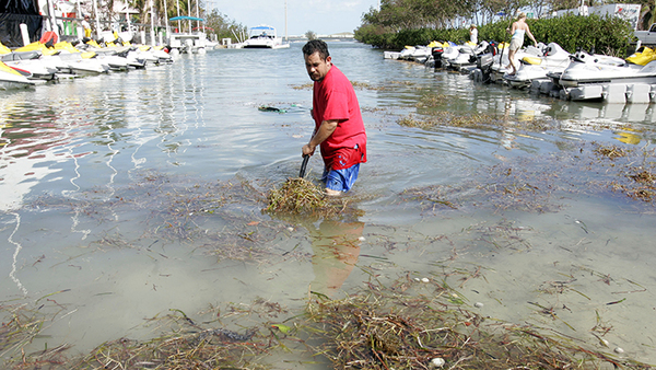A man cleans the sea grass out of a canal outside a Key West, Fla. cafe and boat rental business weeks after Hurricane Wilma flooded the area and left the canal full of trash in 2005. Wilma was the last hurricane to hit South Florida. (AP Photo/J. Pat Carter)