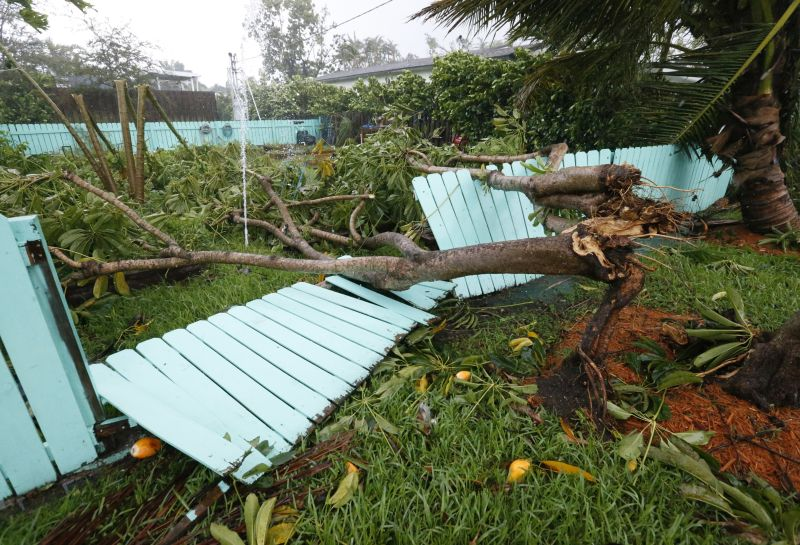 a tree came down on a fence in Surfside, Fla., during Hurricane Irma