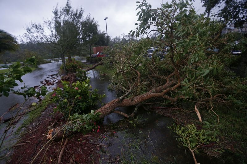 Fallen trees are seen during Hurricane Irma, in Fort Myers, Fla.