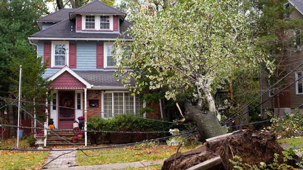 An outdoor property coverage extension expands coverage to trees and tree debris removal expenses, but only for such specific causes of loss as fire, lightning, explosion, riot or civil commotion, or aircraft. (Photo: iStock)