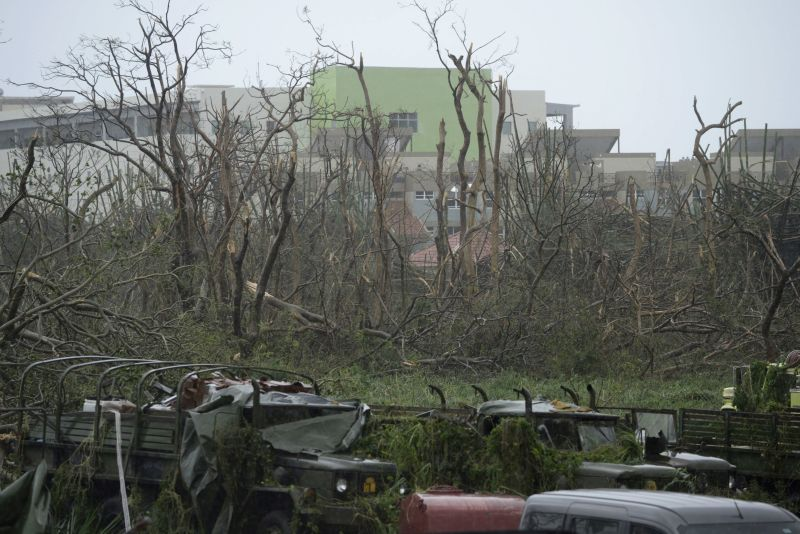 Trees stripped of their foliage and damaged trucks