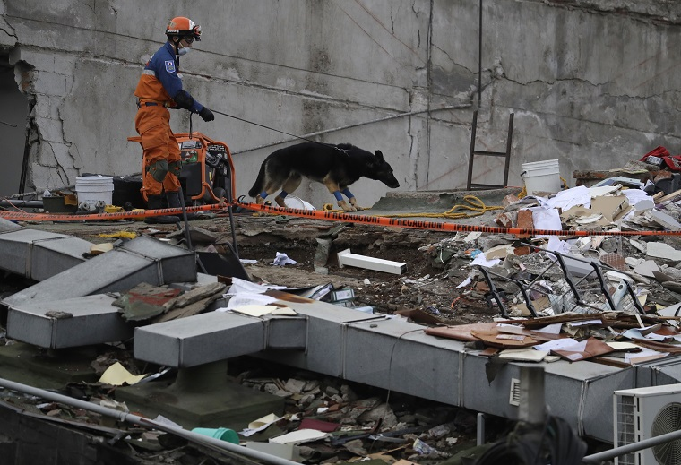 A handler and his rescue dog look for victims at the site of a quake-collapsed seven-story building in Mexico City's Roma Norte neighborhood, Friday, Sept. 22, 2017. Mexican officials are promising to keep up the search for survivors as rescue operations stretch into a fourth day following Tuesday's major earthquake that devastated Mexico City and nearby states. (AP Photo/Rebecca Blackwell)