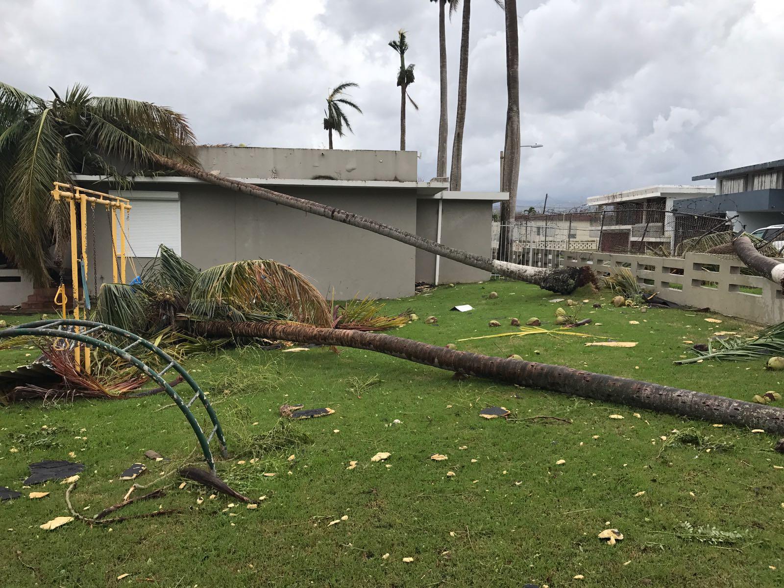 Downed trees in the Cangus neighborhood