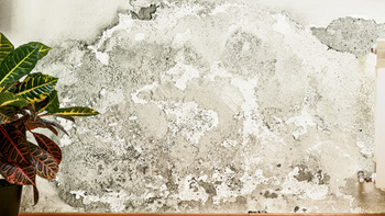Why it is important to properly investigate mold claims
